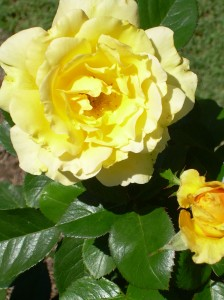 Yellow for joy